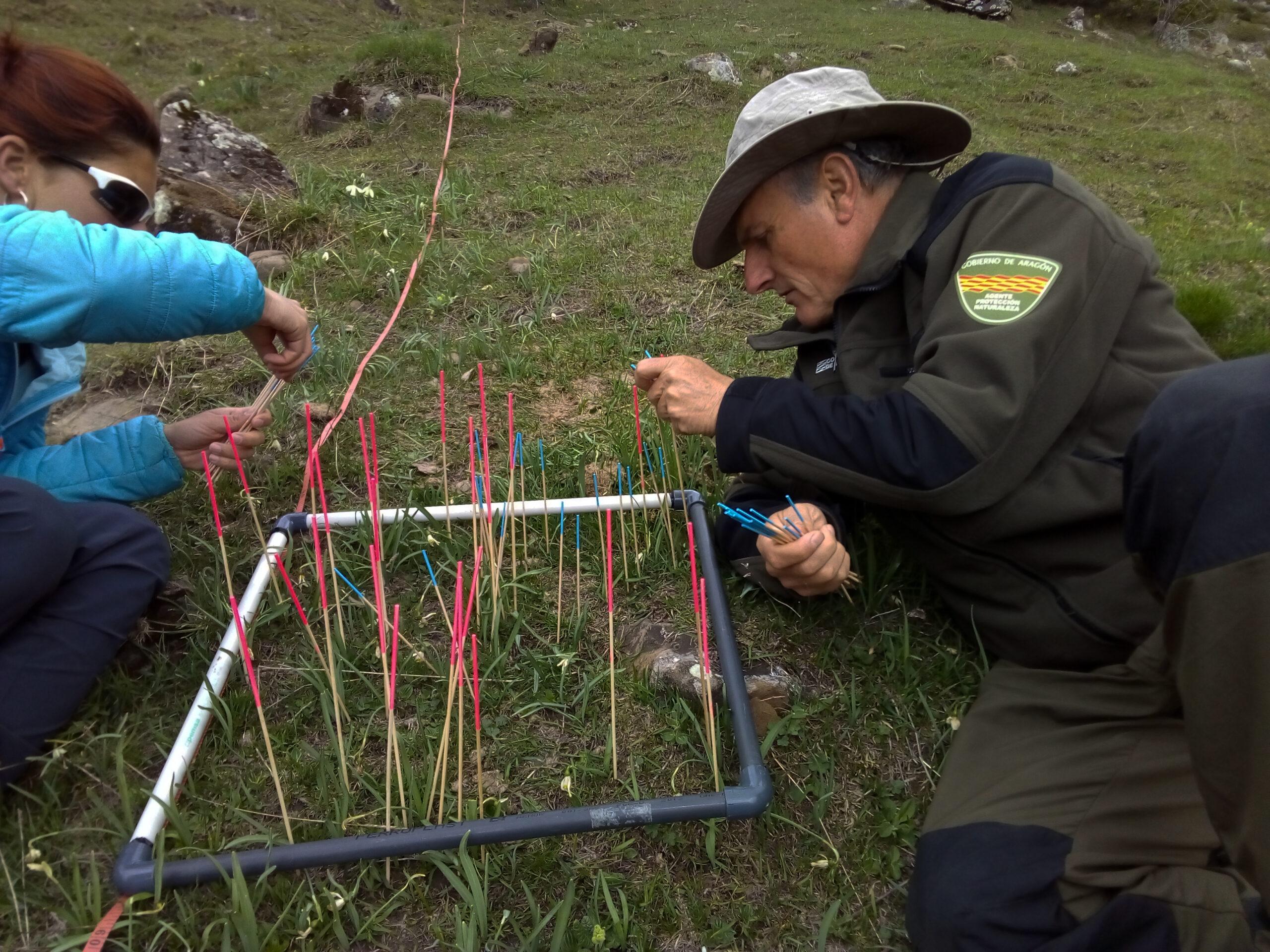 Voluntaria del programa y Agente para la Protección de la Naturaleza realizando una monitorización de Galanthus nivalis